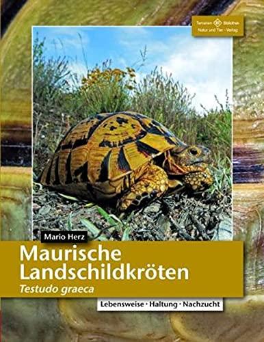 Maurische Landschildkröten: Testudo graeca (Terrarien-Bibliothek)