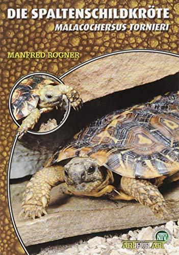 Die Spaltenschildkröte: Malacochersus tornieri